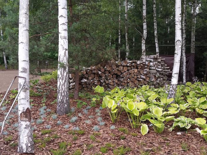 z czasem duże połacie terenu przykryją leśne byliny i trawy
