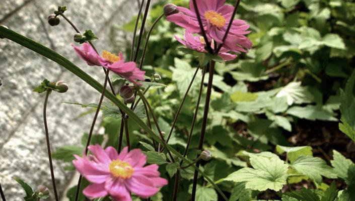 byliny kwitnące