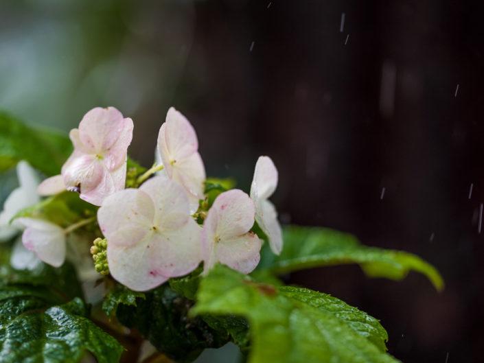 ogród w deszczu