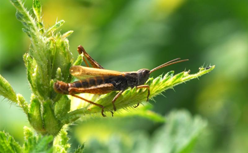 owady w ogrodzie