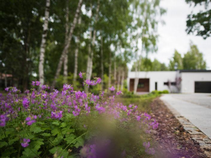 długi podjazd pod dom otaczają rośliny okrywowe kwitnące