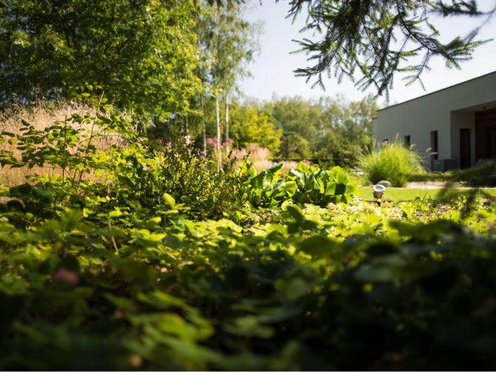 ogród po roku