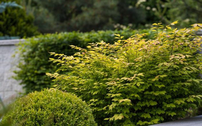 rosnące tuż obok tarasu rośliny
