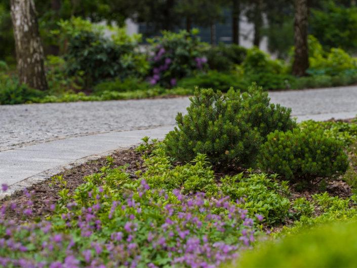 podjazd do domu otoczony jest grupami roślin