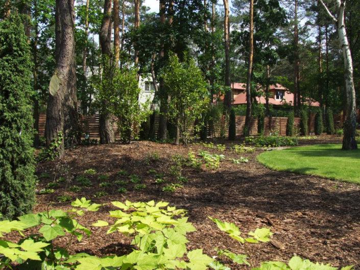 leśny ogród tuż po realizacji